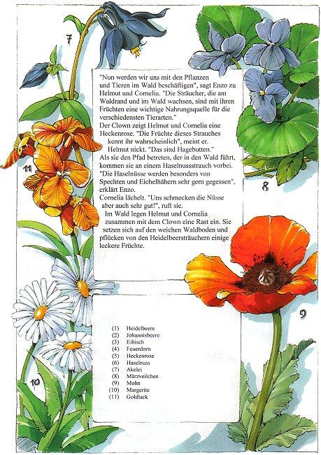 Anmerkung die im naturbuch auf vielen abbildungen gezeigten pflanzen
